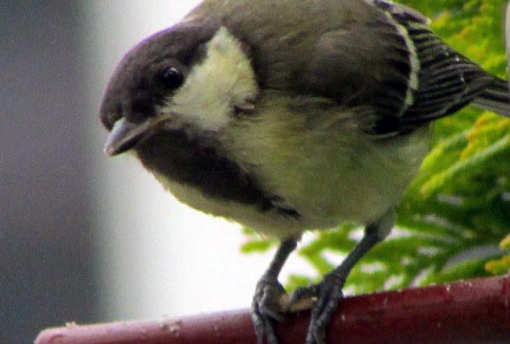 Science-Green-Slam. Vögel