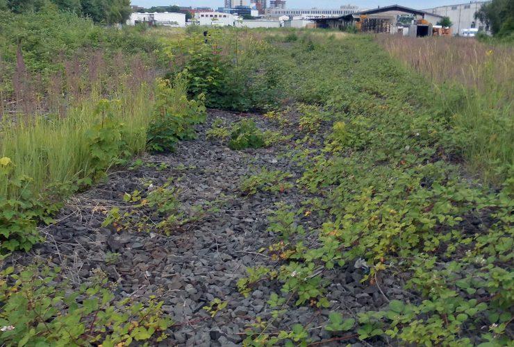 Auswirkungen der Planung zur Parkstadt-Süd auf das städtische Ökosystem