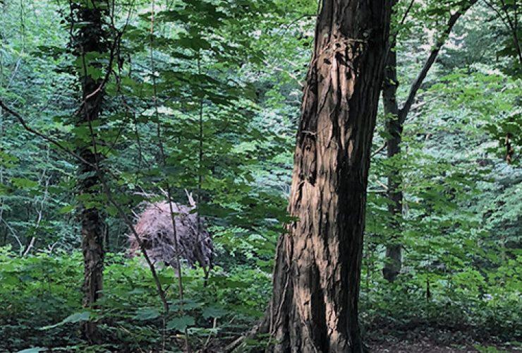 Das Gremberger Wäldchen