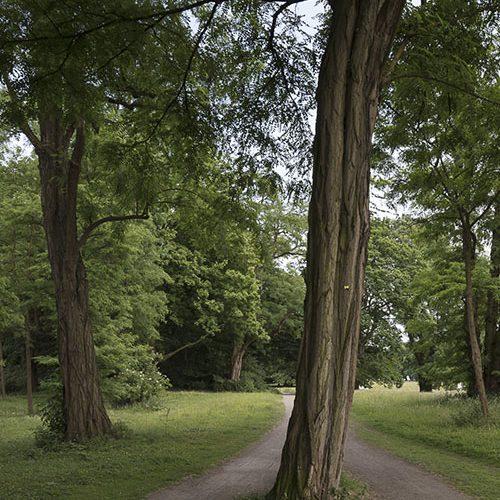 Vom Arboretum zum Decksteiner Weiher