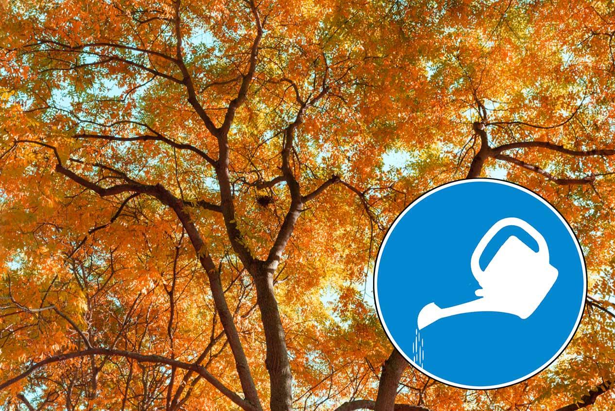 Wasser marsch! Die Stadtbäume brauchen jetzt unsere Hilfe!